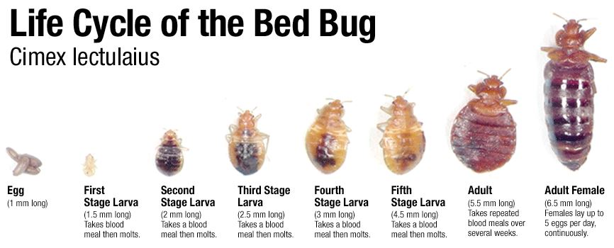 wikihow get pictures step image version titled bugs with how of rid to bed
