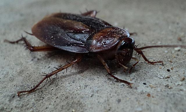 waterbug-roaches