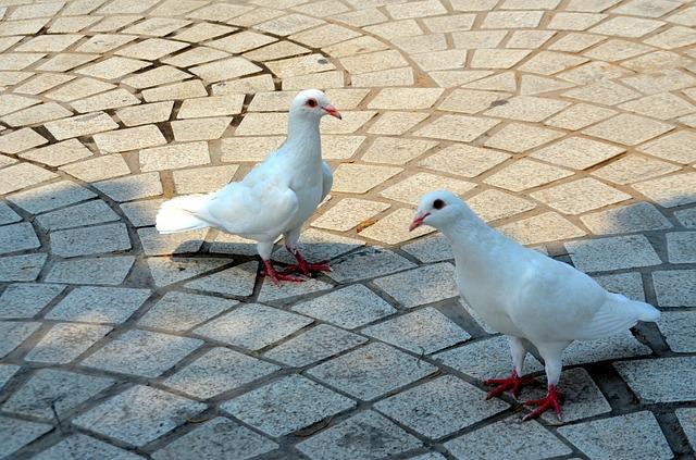 pigeon extermination